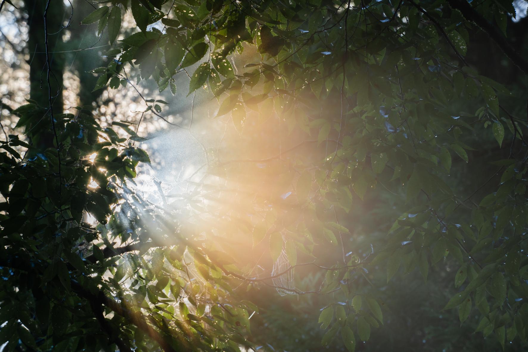 光の雄たけび